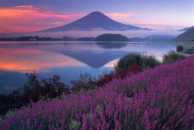 河口湖ラベンダー Mt.Fuji