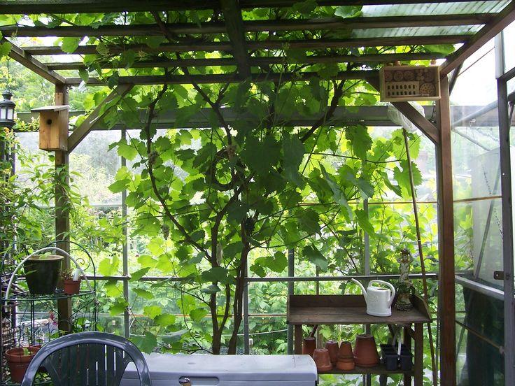 1000 images about tuin op pinterest - Bedekking voor pergola ...