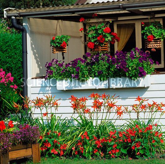 Flower Window Baskets : Best images about window boxes on