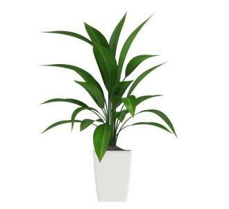Best 25 large indoor plants ideas on pinterest plants for Low maintenance office plants
