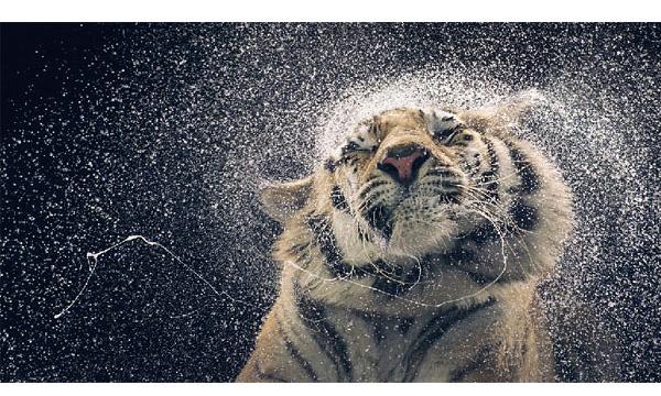 超越人性 Tim FLach獨特的動物肖像攝影 - Wow!LaVie 挖出好設計 創造新生活