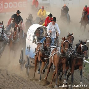 Go see the Calgary Stampede