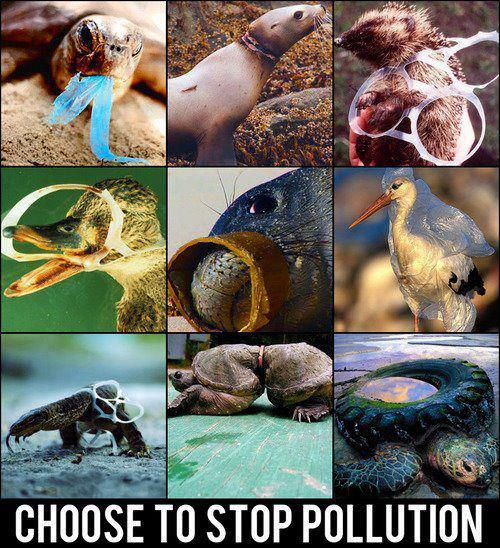 Please, dont litter. Animals lives are at stake.