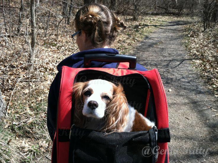 Dog Hiking Potato Creek State Park