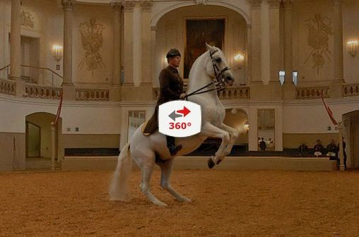 Ecole d'Equitation espagnole - VIENNE – C'EST MAINTENANT OU JAMAIS