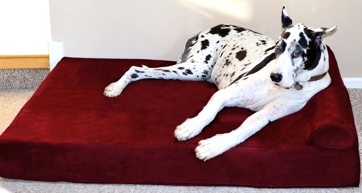 how to clean dog urine from pillow top mattress