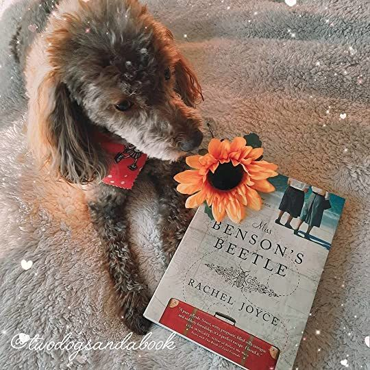 Click on the image to read my complete book review. #bookstadog #poodles #poodlestagram #poodlesofinstagram #furbabies #dogsofinstagram #bookstagram #dogsandbooks #bookishlife #bookishlove #bookstagrammer #books #booklover #bookish #bookaholic #reading #readersofinstagram #instaread #ilovebooks #bookishcanadians #canadianbookstagram #bookreviewer #bookcommunity #bibliophile #missbensonsbeetle #racheljoyce #bookreview