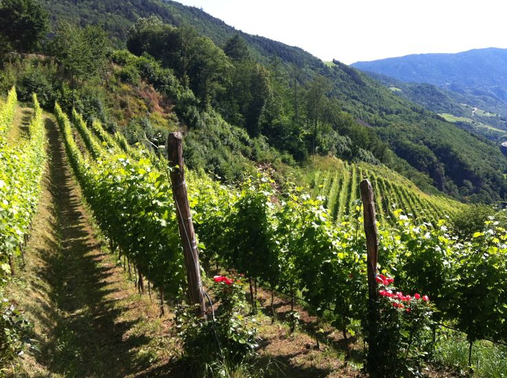 Tour Trentino Alto Adige