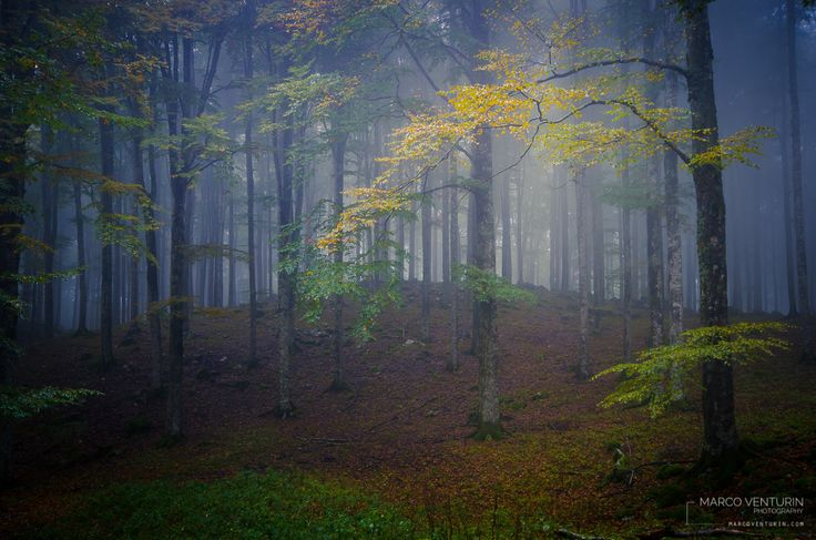 Foggy autumn by Marco Venturin on 500px