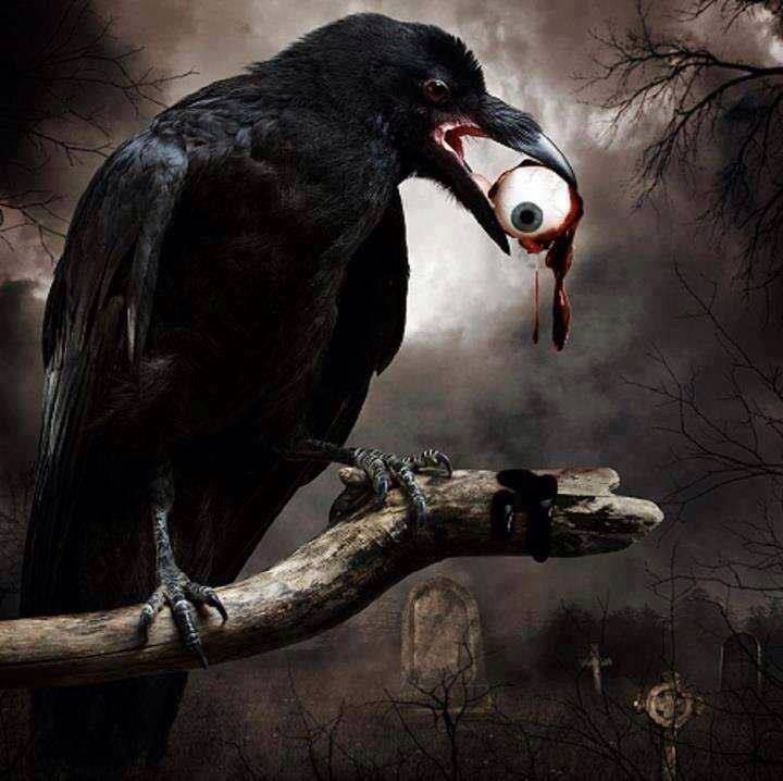 Crows And Ravens Although Crows And Ravens Are Part Of The Same Family  Corvus   They U2019re Not