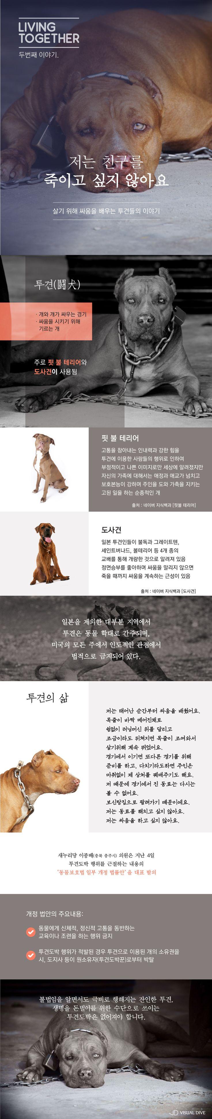 """투견의 슬픈이야기…""""친구를 죽이고 싶지 않아요"""" [인포그래픽] #Dog / #Infographic ⓒ 비주얼다이브 무단 복사·전재·재배포 금지"""