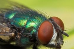 Some great tips on macro photography