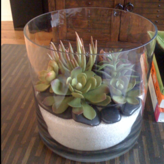 My faux terrarium, succulents from Pottery Barn, vase from Marshalls, rocks and sand from Michaels.