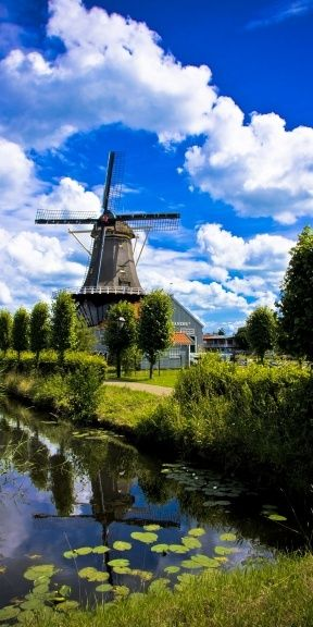 The serene (and somewhat stereotypical) Netherlands Windmill has become nearly a national symbol for the Dutch - a common feature on postcards, t-shirts, delft blue pottery and other souvenir novelties. Originally, windmills were machines that convert the energy of wind for milling grain for food production.