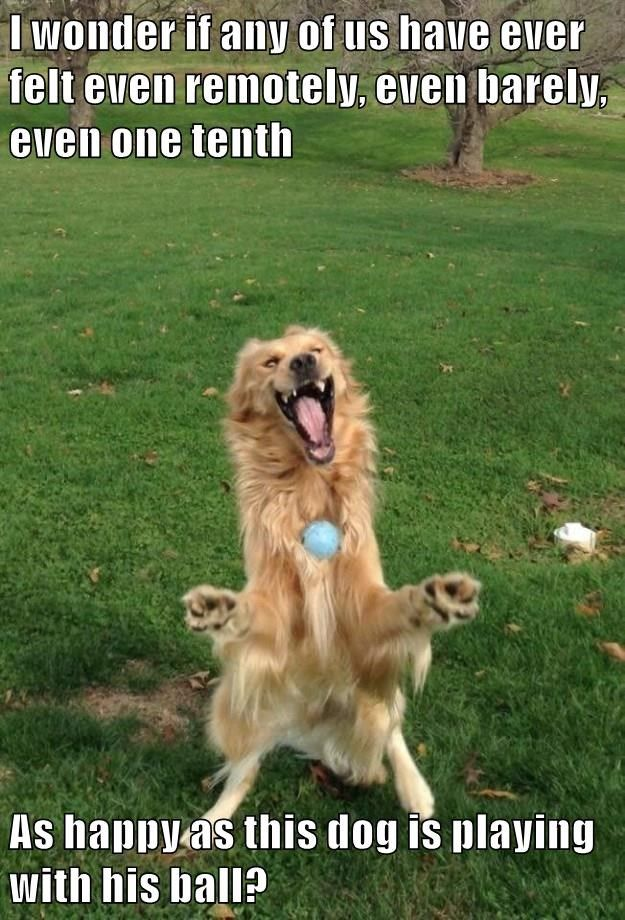 I wonder if any of us have ever felt even remotely, even barely, even one tenth As happy as this dog is playing with his ball?