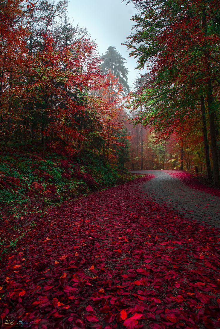 ~~memorization disrupts spring | blazing autumn color road landscape | by Zeki Seferoglu~~
