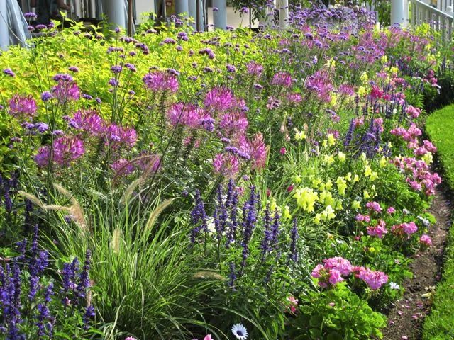 Toronto Gardens: Making the case for annuals