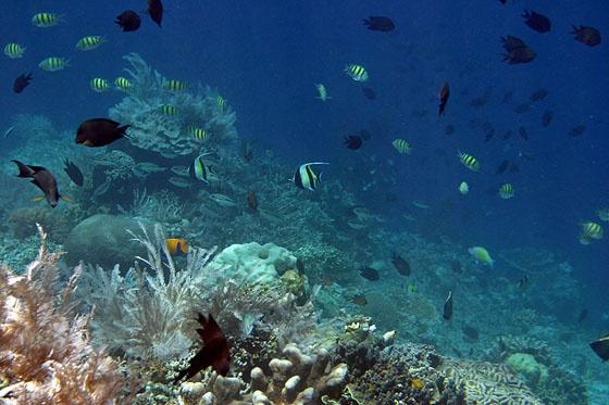 Bunaken - Manado - Sulawesi Island
