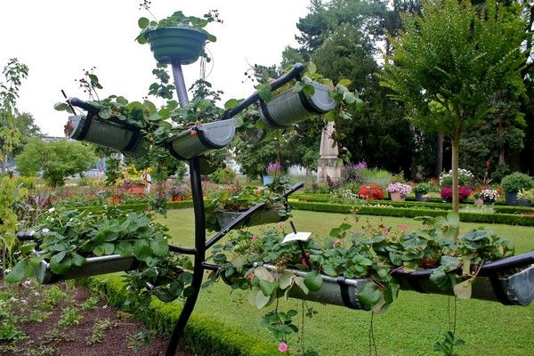 Vertical Squash Gardening