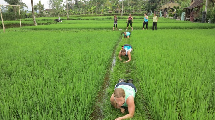 our trainers love our rice paddies... bear crawls, walking lunges ... the possibilities are endless