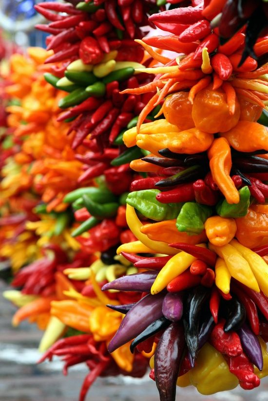 Chillis...so beautiful tied on strings..must do this for kitchen & Xmas deco...