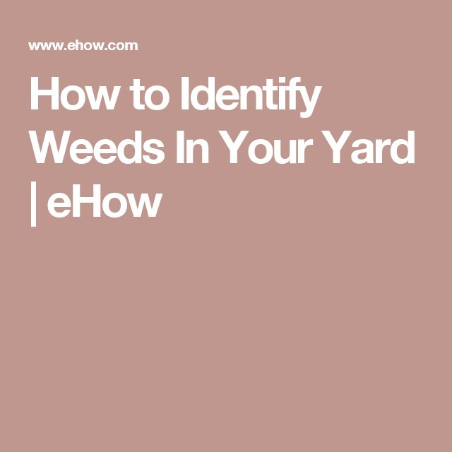 How to Identify Weeds In Your Yard | eHow