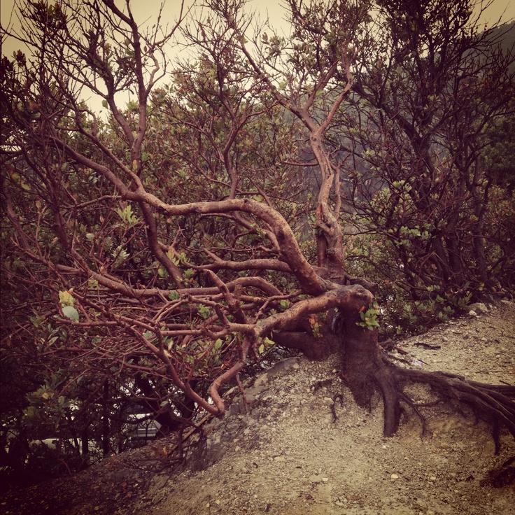 A dramatic tree