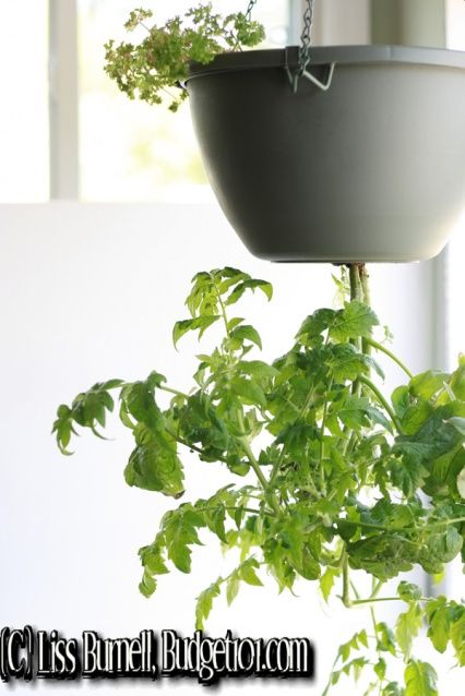 DIY.  ..  .. Have you seen those cute little tomato planters that hang upside down- the ones with the hefty price tag of $15-40!? Well, I loved the idea, hated the price so we decided to make our own for $2.00.