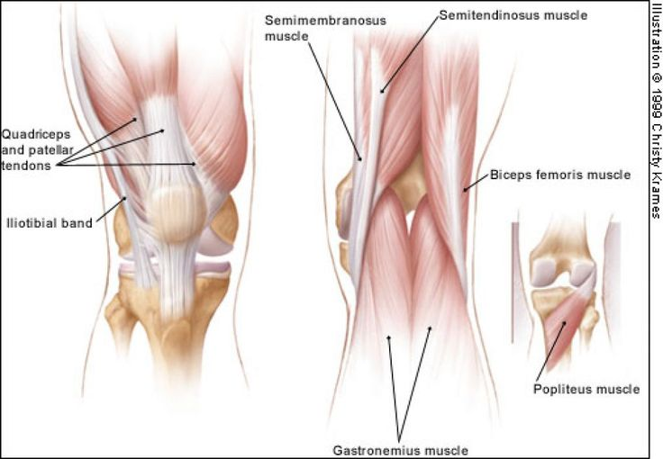 posterior knee muscles | anatomy for art - arms & legs | pinterest, Muscles