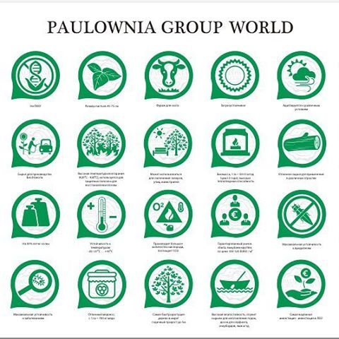 Разработка значков для 🌎Paulownia Group World  #paulownia #tree #world #ukraine #design #ua #graphic #graphicdesign #paint #girl #work #infographic #illustration #time #like #thinking #лого #дизайн #дизайнер #киев  #стдизайнер #татьянасемчук