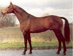 Schwadroneur DVE 343 Årets Hingst 2000  Schwadroneur DVE 343 A- hest i dressur og udnævnt til Elitehingst i Dansk Varmblod i 1995. Han er far til over 30 A-heste i dressur, samt mere end 10 Grand Prix heste