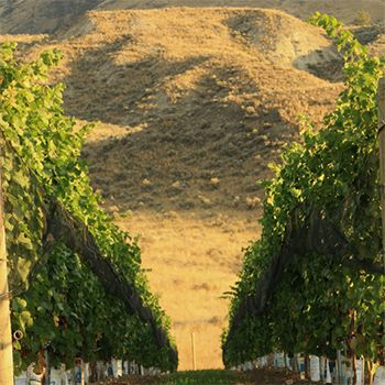 Canadian Winery Spotlight: Harper's Trail
