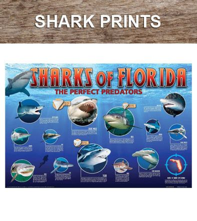 We are a publisher of shipwreck charts and maps, fishing charts and maps, shark prints, hurricane tracking charts, and popular nautical prints and gifts.