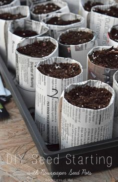 Seed starting is a family affair and a great spring time activity in anticipation of gardening season. Learn how to create your own DIY newspaper seed pots for garden seeds. Re-purpose, re-use, and recycle with newspaper seedling pots.   #EveryDayCare