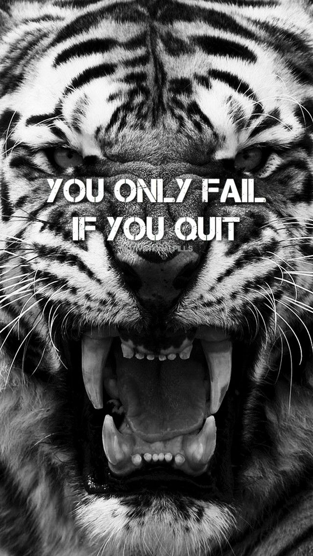 Quote Tiger Motivational Inspirational Wallpaper Iphone Wallpaper Iphone Wallpaper Quotes Inspirational Iphone Wallpaper Inspirational Tiger Quotes