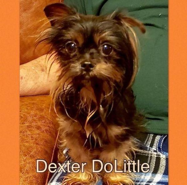 Dogs For Adoption Near Little Rock Ar Petfinder Dog Adoption
