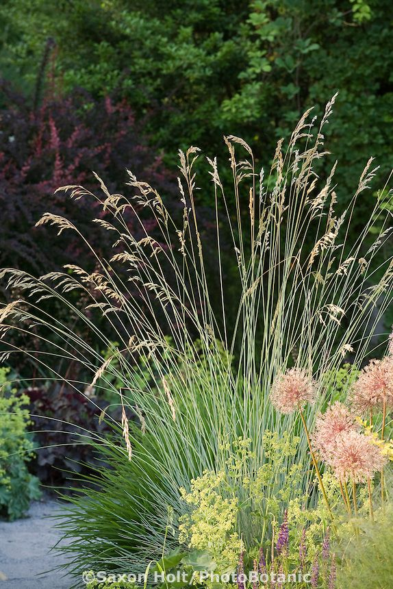 563 best images about ornamental grasses and landscape for Border grasses for landscaping