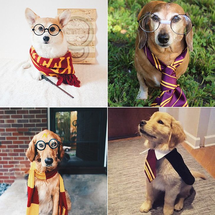 These Harry Potter Halloween Costumes For Pups Are Simply Magical: You know what Hogwarts was really missing?