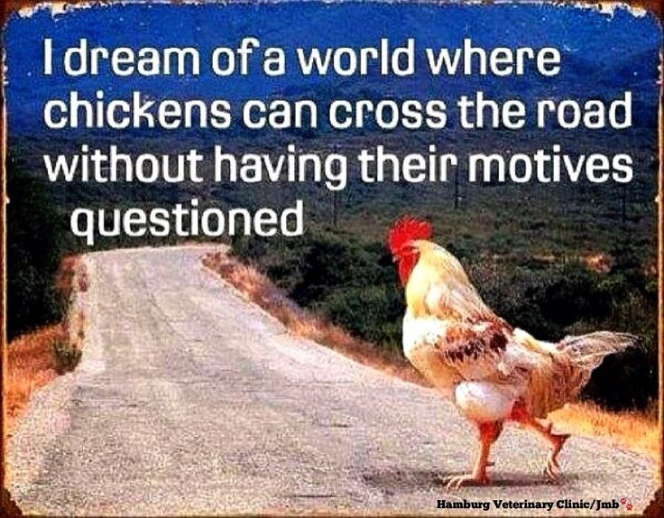 Chicken Humor Funny: 17 Best Images About : Chuckles : On Pinterest