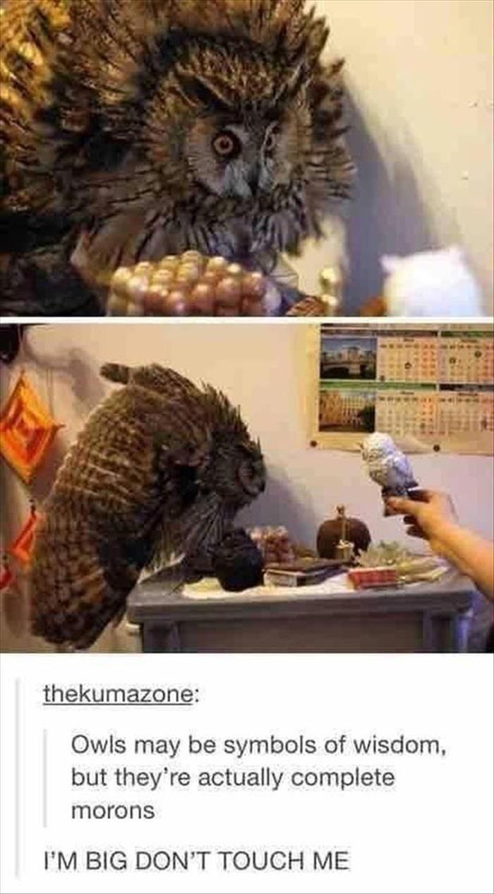 Owls aren't actually that smart