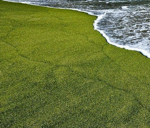 http://2.bp.blogspot.com/-WKB409dsC6w/U_s-h5rnkeI/AAAAAAAADsg/46Xh51yuKoE/s1600/Papakolea-Green-Sand-Beach-Hawaii-Mahana-Beach-02.jpg