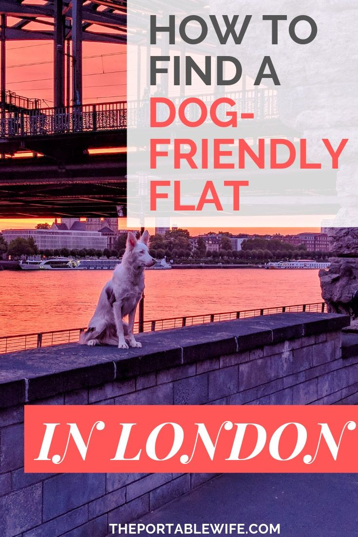 Renting In London With A Dog What You Should Know London Rent In London Weekend In London