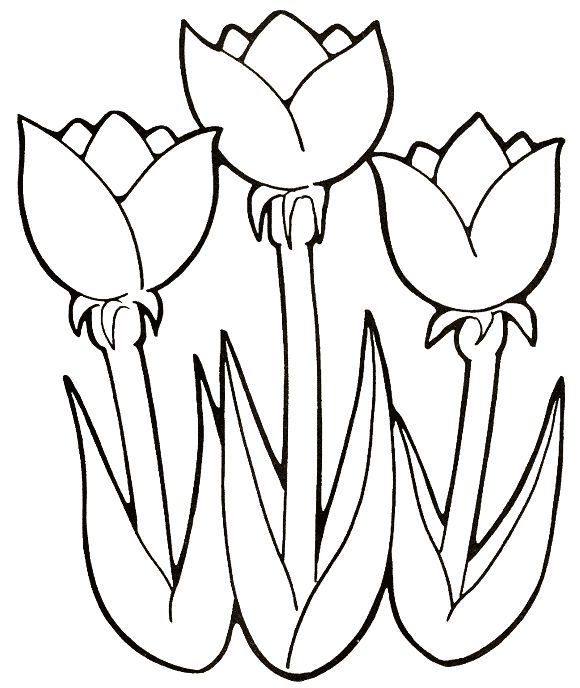 61 best dibujos de flores images on Pinterest  Draw Patterns and