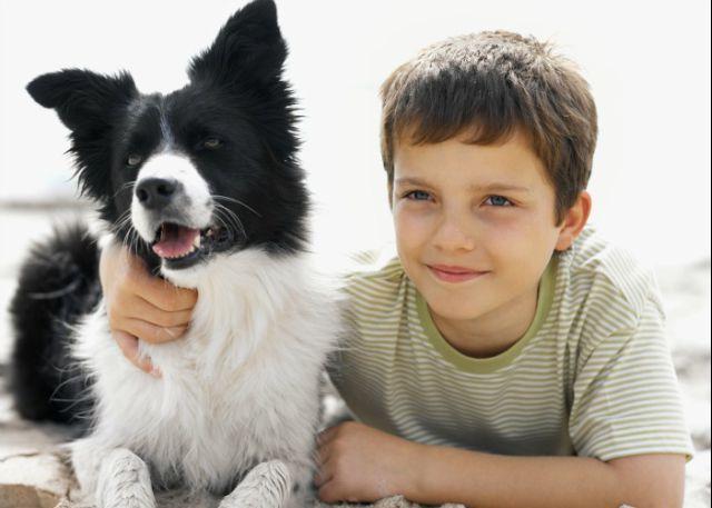 """<a href=""""/parceiros/saber-viver"""">Revista Saber Viver</a> · As crianças querem tudo. Enquanto umas pedem aos pais brinquedos novos ou (mais) um irmão, há outros que imploram uma mascote, sobretudo um cão. Conheça as raças mais indicadas para as crianças antes de escolher o novo companheiro do seu filho"""