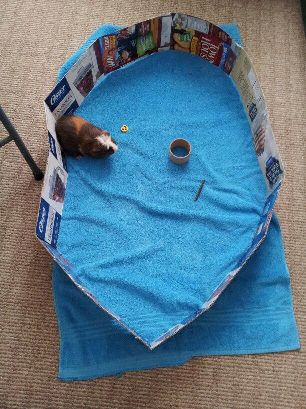 This is a guinea pig play pen I made from extra cardboard laying around my house. It was simple and easy to make. There is a towel underneath if she has an accident.  So far Olivia loves it!