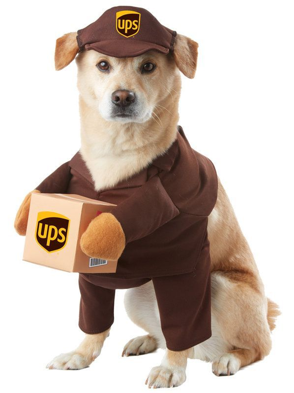 Ups Pal Costume For Pets Dog Halloween Costumes Cute Dog