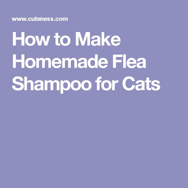 How to Make Homemade Flea Shampoo for Cats #CatSprayingProducts