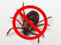 Katerina's Journal: Natural Home Made Cost Effective Tick Treatment