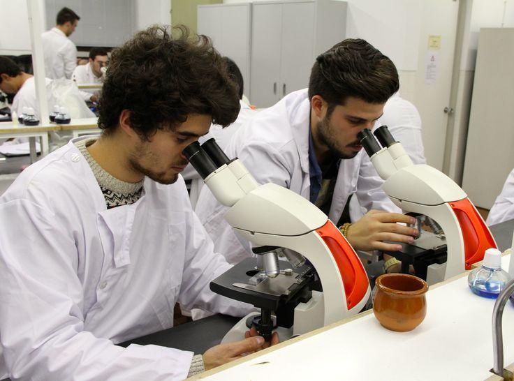 Analisando células e estruturas vegetais em Botânica e Fisiologia Vegetal. Analysing cells and plant structures on Botany and Plant Physiology. © Serviços de Imagem IPB