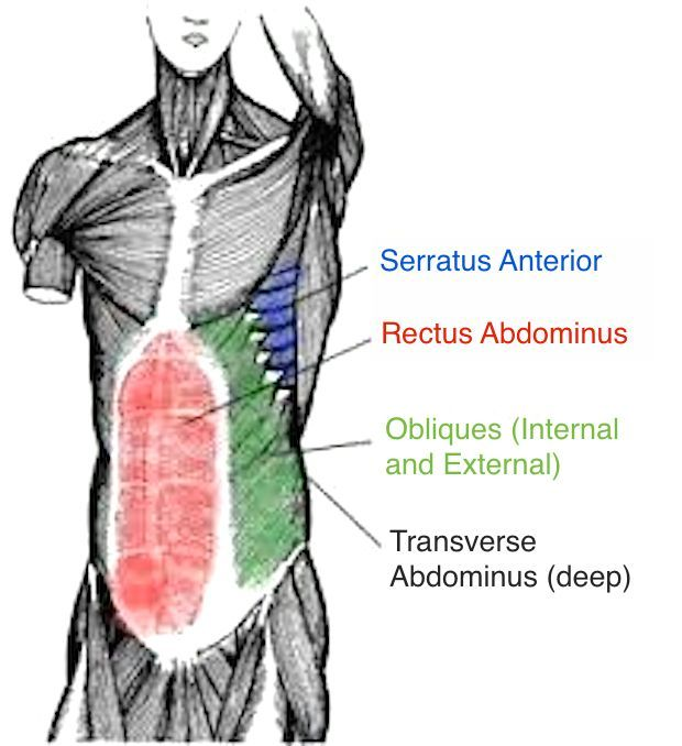 Posture Core Muscles